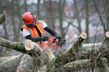 Planting & Tree Removal